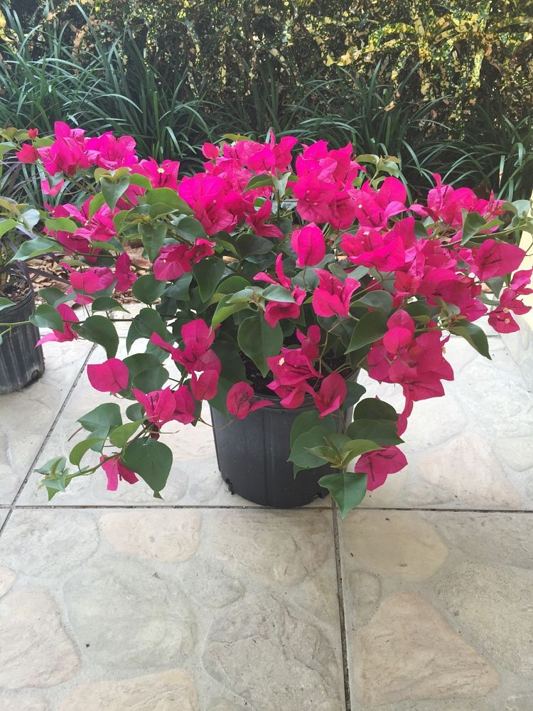 R Plants Nursery Plantant Com