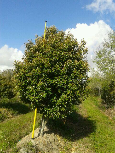 Image Gallery Native Tree Nursery