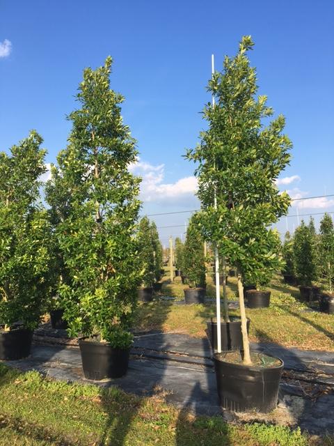 Becker Tree Farm Amp Nursery Plantant Com