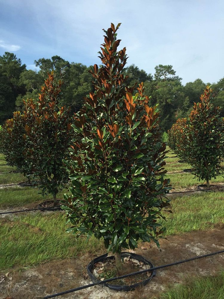 Image Gallery Slay S Trees