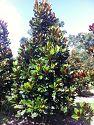 Gallery Southeastern Trees Wholesale Nursery