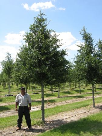 Fish Branch Tree Farm Inc Plantant Com