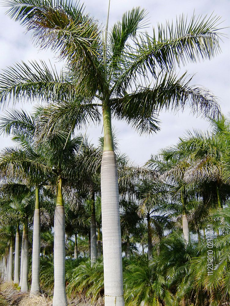 Native Tree Nursery, Inc. | plantANT.com