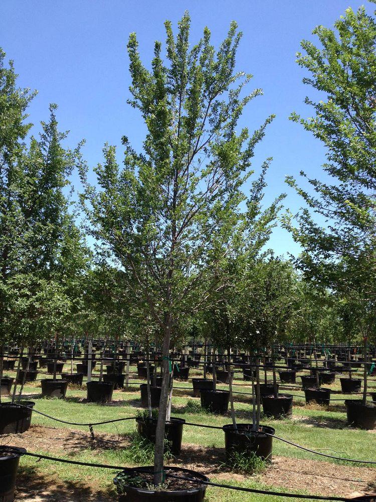 Image Gallery Flory Tree Farm
