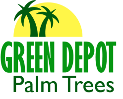 Green depot palm trees Home depot palm beach gardens