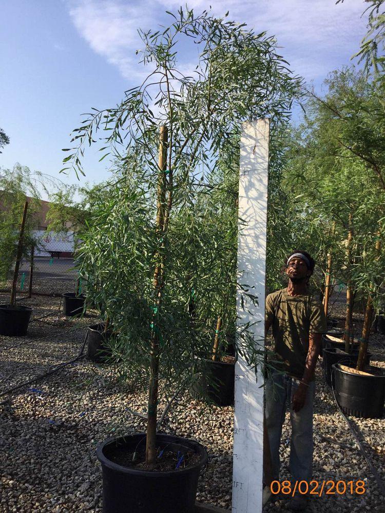 Arizona Wholesale Growers Plantantcom