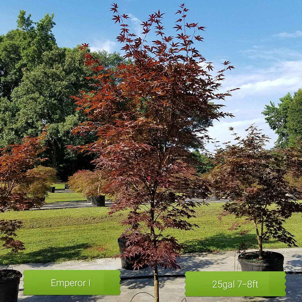 Garden Design Nursery | plantANT.com