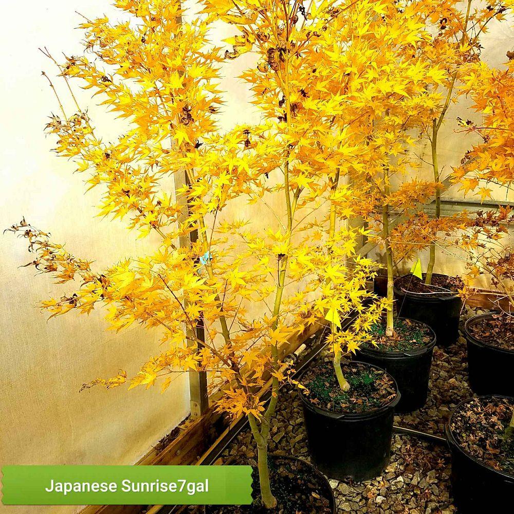 Garden Design Nursery Plantantcom