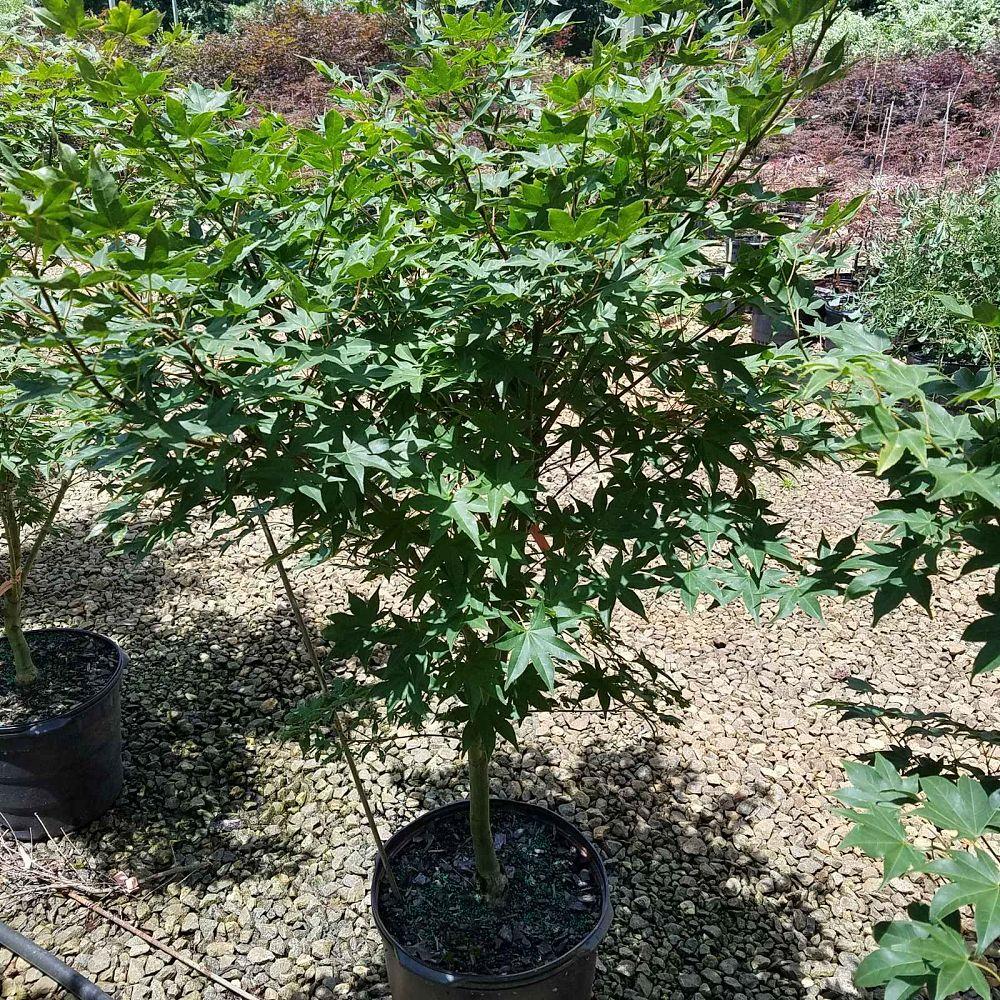 Garden Design Nursery Plantant Com