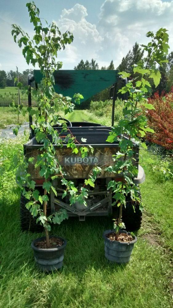 Chestnut Hill Nursery Plantant Com