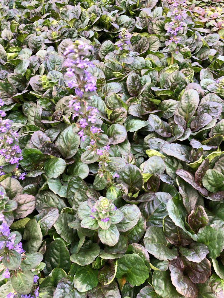 Botanical Treasures | plantANT com