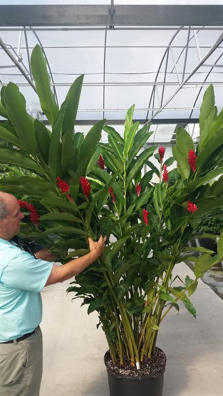 Excelsa Gardens, Inc    plantANT com