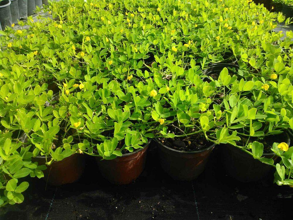 Zugar Growers Plantant Com