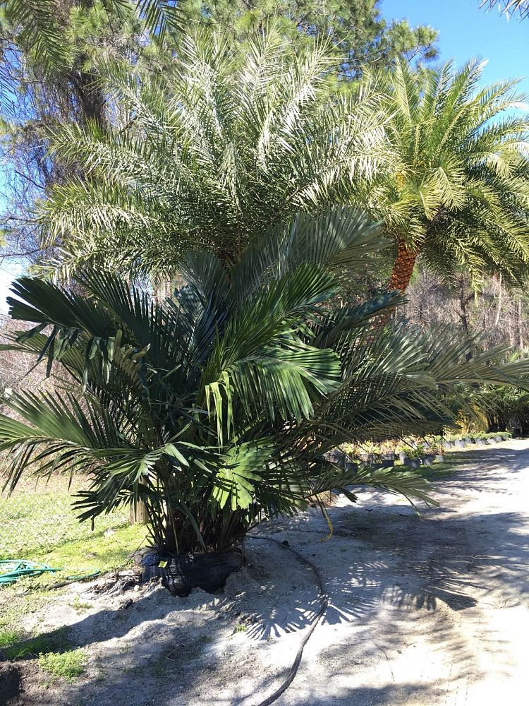 Unique Plants And Palms Plantant Com
