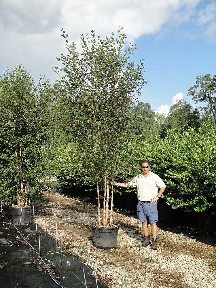 Mack Bros Landscape Nursery Plantant Com