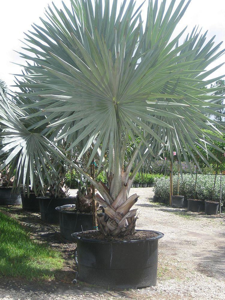 Mega Church Palm Beach Gardens