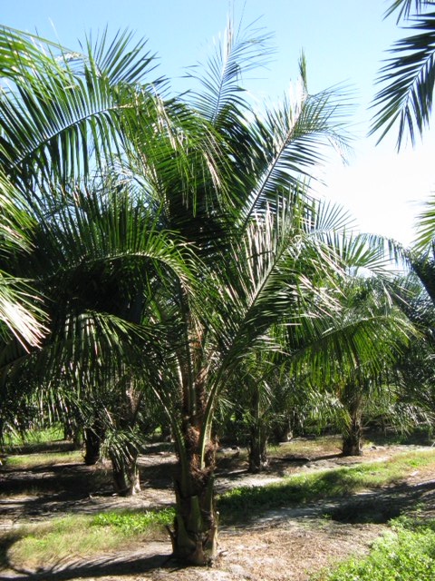 jwd trees inc plantantcom