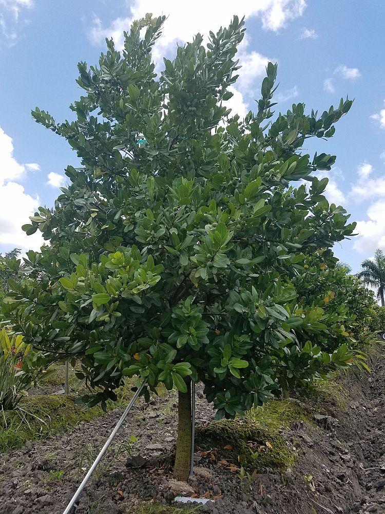Everett Acres Plantant Com
