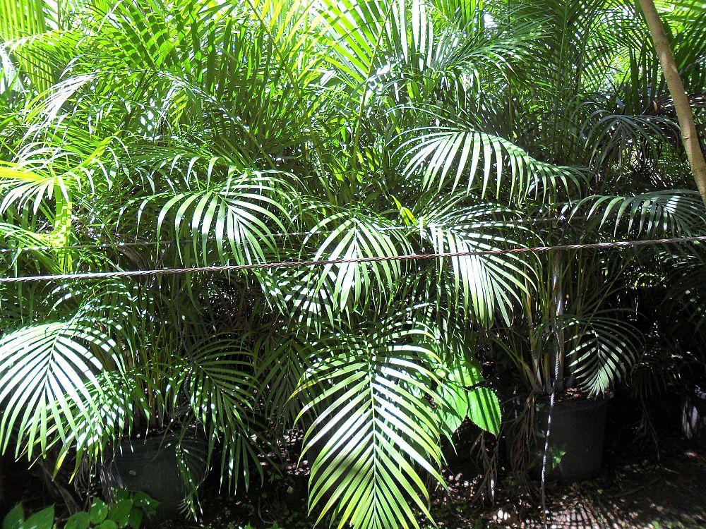 Florida Superior Nursery Plantant Com