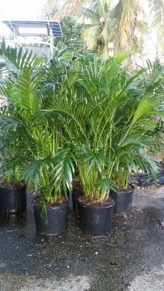 D Amp S Nursery Plantant Com