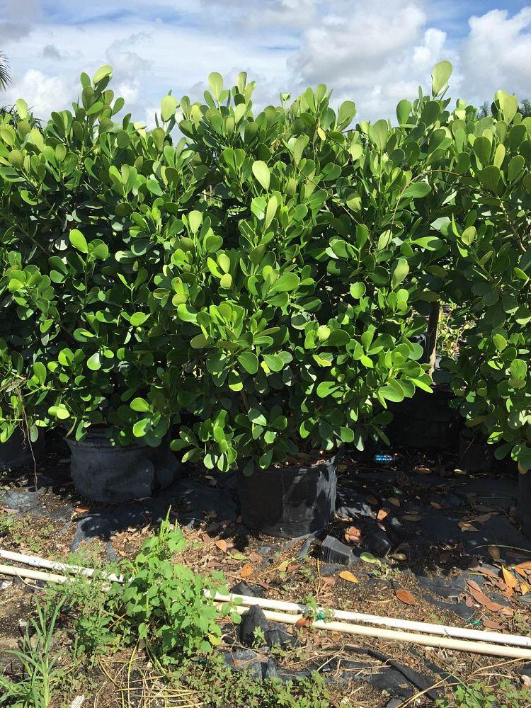 Adi Plantscape Plantant Com