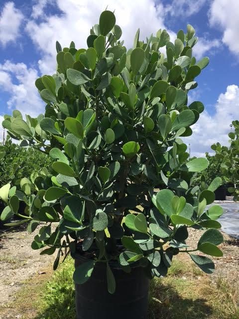 Bick Tropical Farms Inc Plantant Com