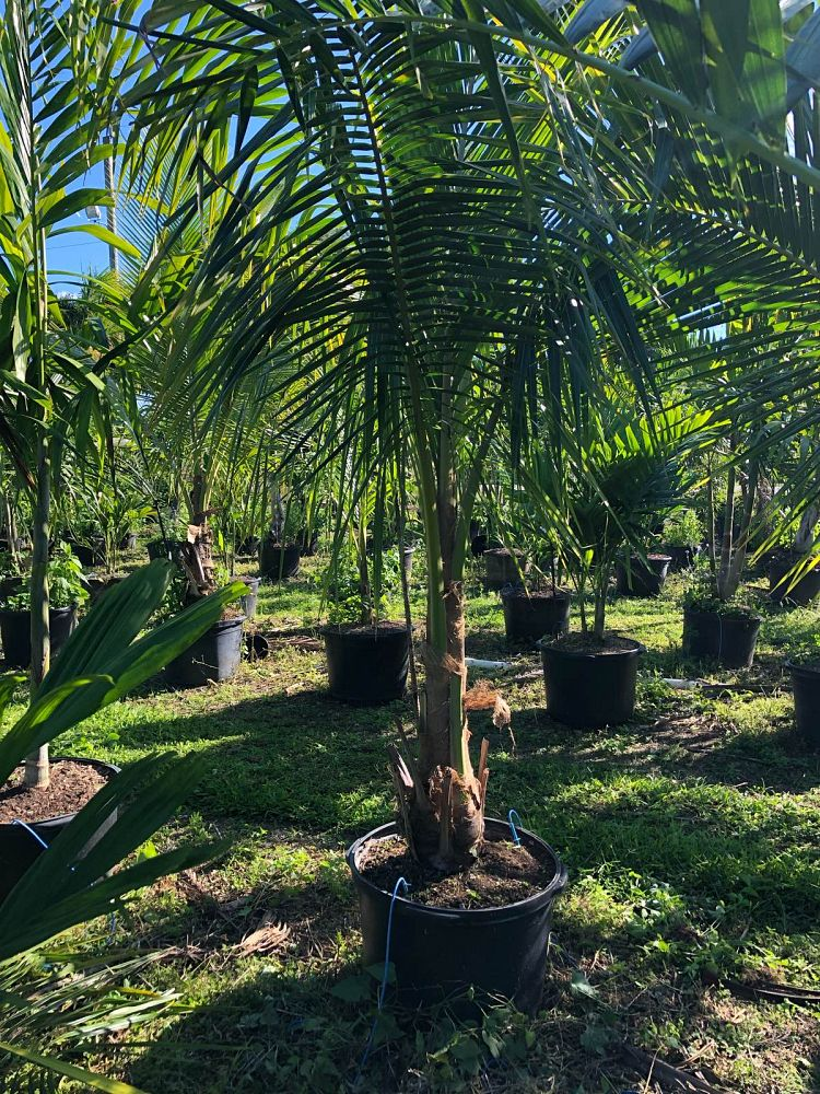 Ajm Nursery Inc Plantant Com