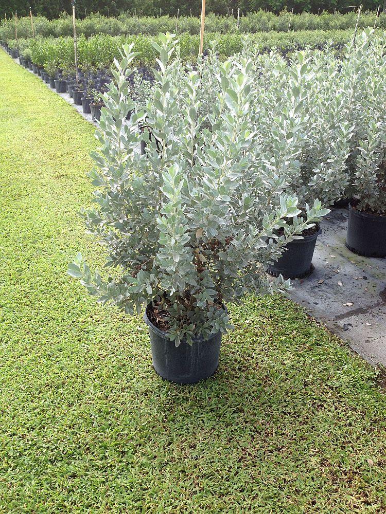 Smarty Plants Nursery Llc Plantant Com