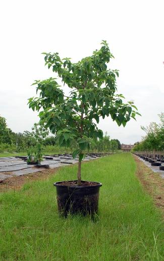 Top Notch Tree Farm Llc Plantant Com