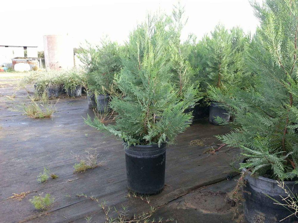 Miller Nursery Amp Tree Company Plantant Com