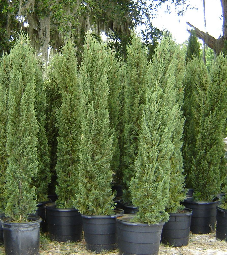 Locate Amp Find Wholesale Plants