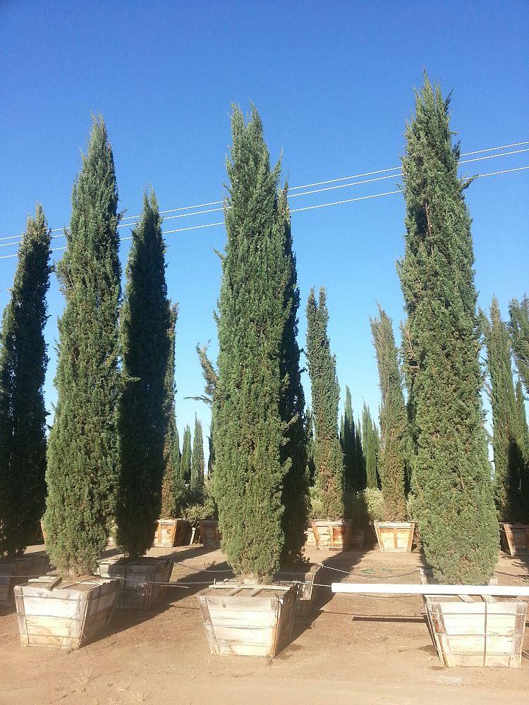 Golden State Tree Company Plantant Com