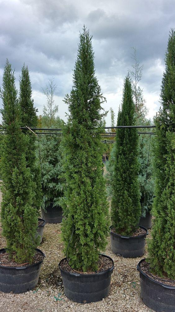 Live Oak Gardens Ltd Plantant Com
