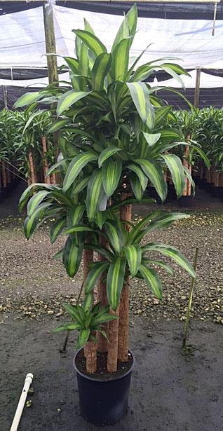 Morning Dew Tropical Plants Delray Beach Fl