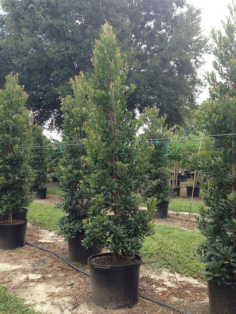 Rec Nursery Plantant Com