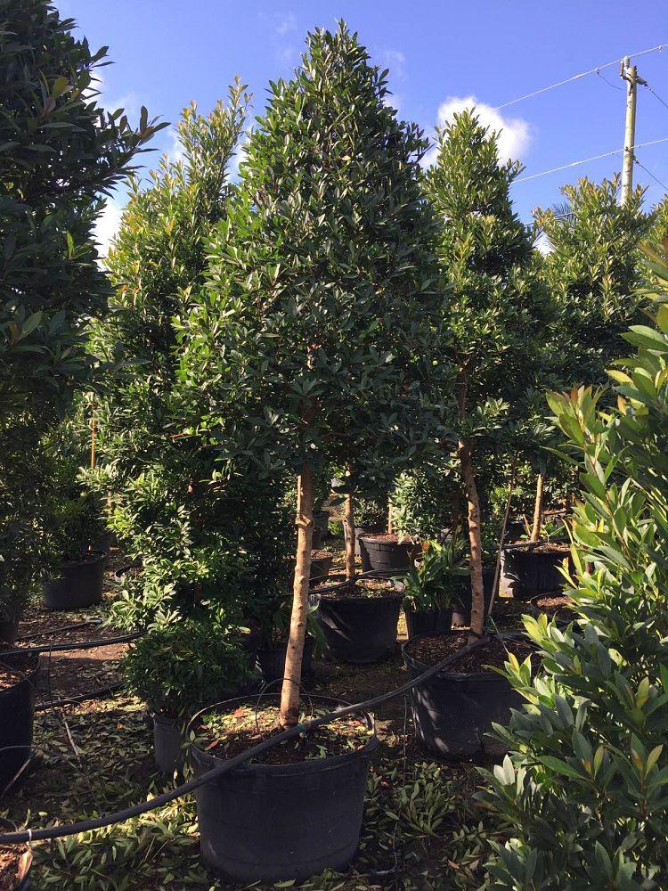 R Amp K Nursery Plantant Com