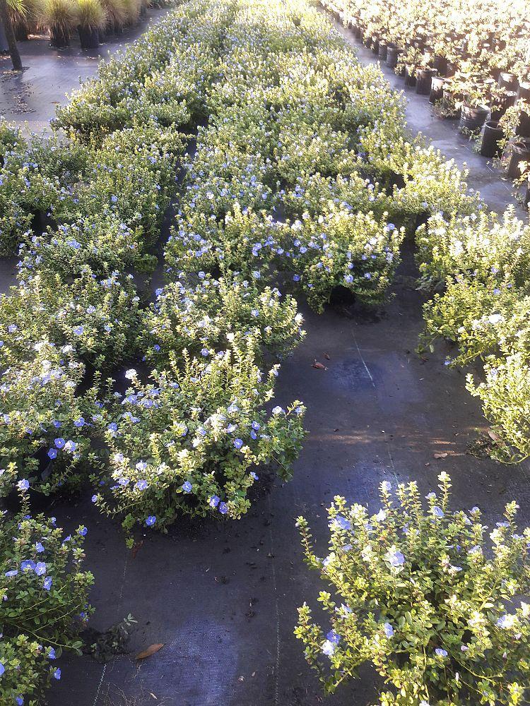 Citrus Park Landscape Nursery Plantant Com