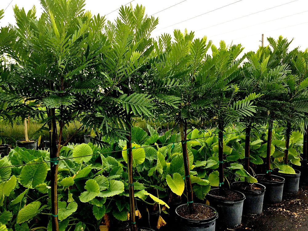 Locate find wholesale plants for Tree nursery