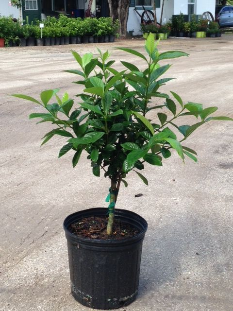Locate Amp Find Wholesale Plants Plantant Com