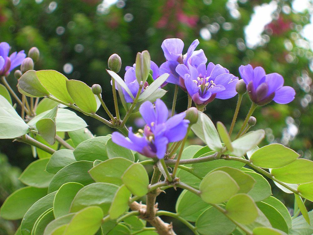 общения гваяковое дерево фото боятся камеры