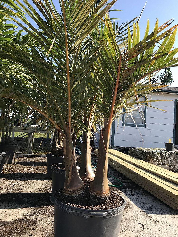 Black Hammock Tree Farm Plantant Com