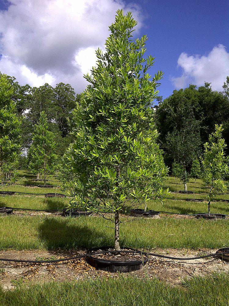 Slay S Trees Plantant Com