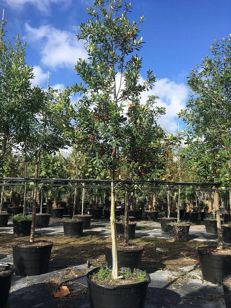 Allgreen Nursery Plantant Com