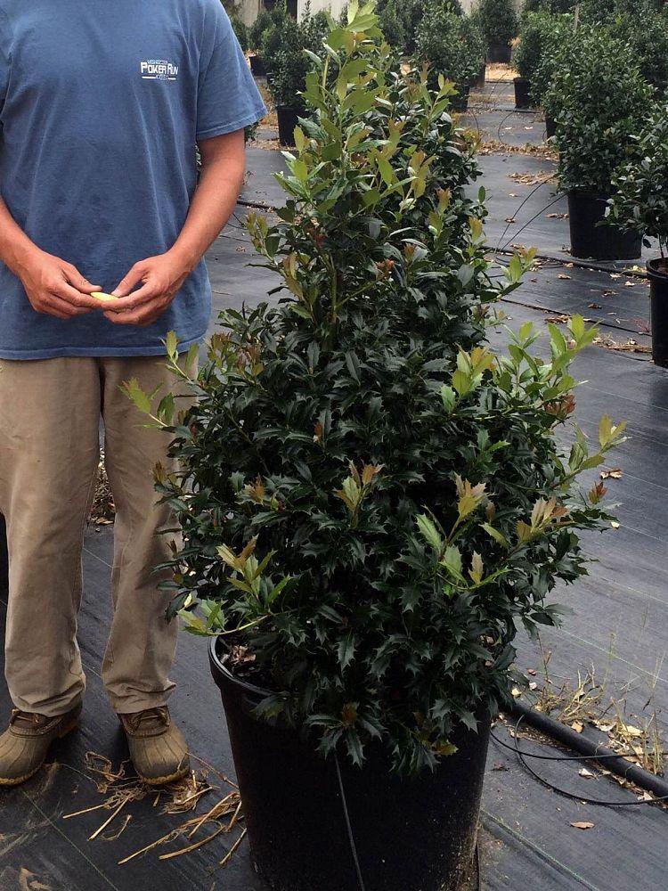 Monticello Nurseries Plantant