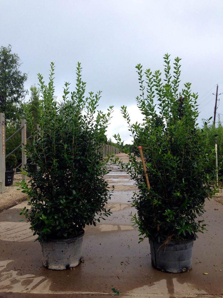 Hederhorst Farms Plantant Com