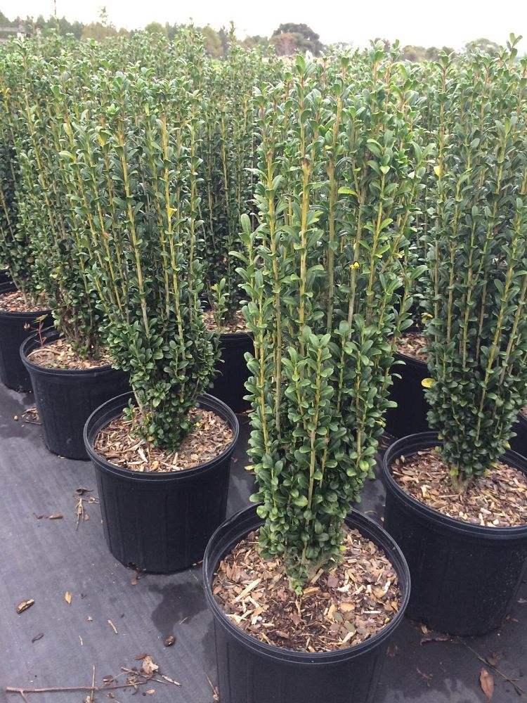 Dairyland Nursery Llc Plantant Com