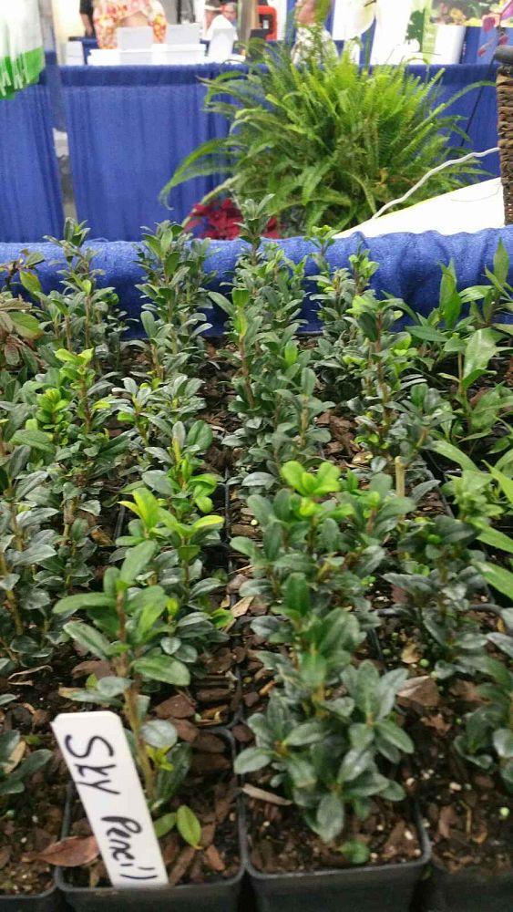 Locate & Find Wholesale Plants | plantANT.com