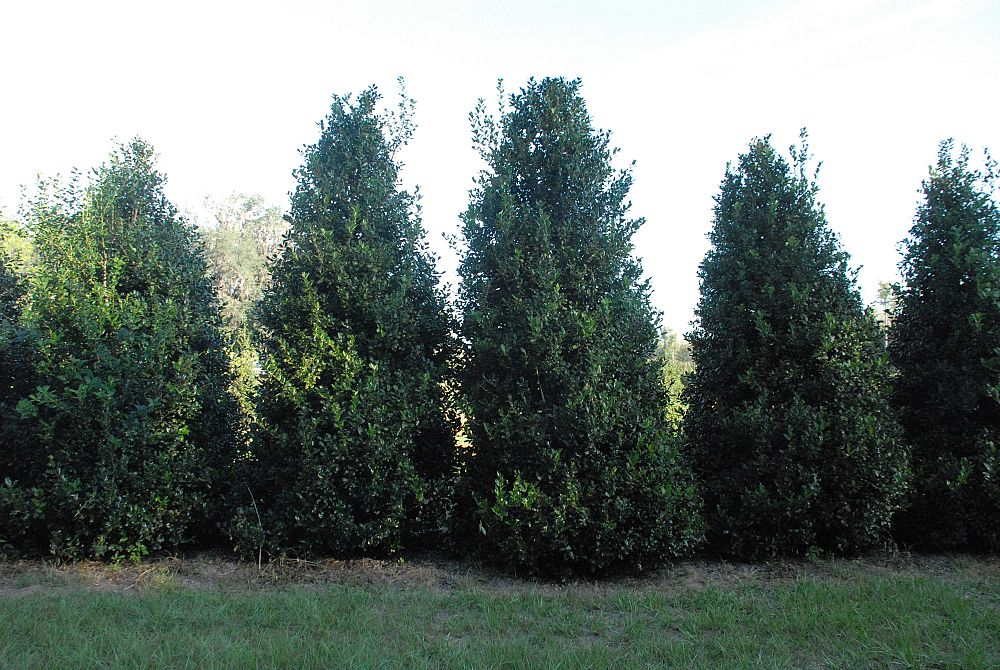 Boggy Creek Tree Farms Plantant Com