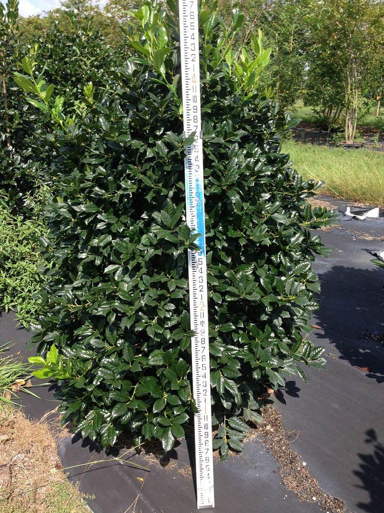 Locate Amp Find Wholesale Plants Plantant Com
