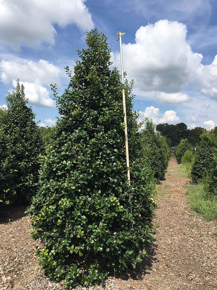 Worthington Farms Plantant Com